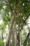 Vieux concept d'environnement d'usine de nature de vert de feuille d'arbre Images libres de droits
