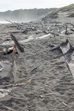 Vieux coque et bois de flottage de bateau sur la plage de c?te ouest image libre de droits