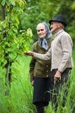 Vieux couples d'agriculteurs dans le verger Image stock