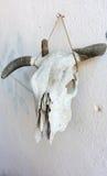 Vieux crâne de bétail Image stock