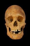 vieux crâne préhistorique d'isolement par être humain Photo libre de droits