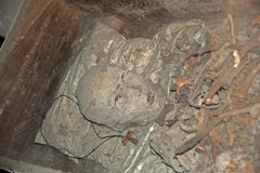 Vieux crânes photos stock