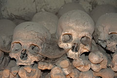 Vieux crânes photographie stock