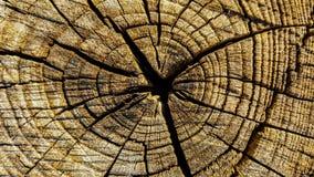 Vieux crosscut le rondin Image libre de droits