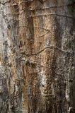 Vieux détail polaire de texture de cambium d'arbre photos libres de droits