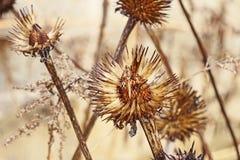 Vieux ` de fleurs de ` Image libre de droits