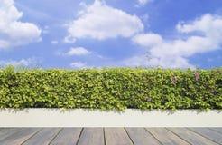 Vieux decking et usine en bois avec le jardin de mur décoratif sur le ciel bleu image libre de droits