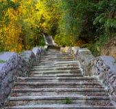 Vieux escaliers abandonnés montant à la forêt, bâti d'Ulia images libres de droits