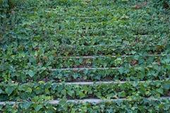 Vieux escaliers couverts de feuilles Image libre de droits