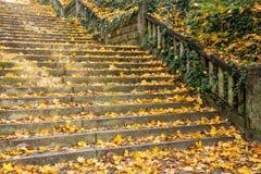 Vieux escaliers d'automne Image stock