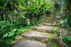 Vieux escaliers en pierre dans la forêt tropicale de jungle Photos libres de droits