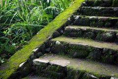 Vieux escaliers en pierre dans la forêt tropicale de jungle Photographie stock libre de droits