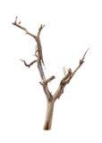 Vieux et mort arbre images stock