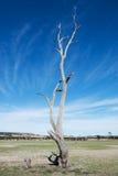 Vieux et mort arbre Photographie stock libre de droits