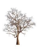 Vieux et mort arbre image stock