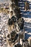 Vieux et partiellement décomposés brise-lames en bois Photos libres de droits