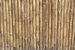 Vieux et sec bambou Photos libres de droits