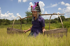 Vieux femme asiatique, Akha Photo libre de droits