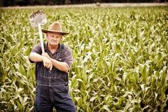 Vieux fermier de cru dans les domaines de maïs Image libre de droits