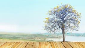 Vieux fini en bois de perspective vide sur l'arbre de jaune de fond Image libre de droits