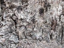 Vieux fond âgé rustique d'arbre Images stock