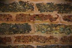 Vieux fond concret de mur de briques de vintage Image libre de droits