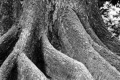Vieux fond d'arbre photographie stock