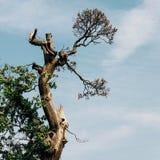 Vieux fond d'arbre et de ciel Photographie stock