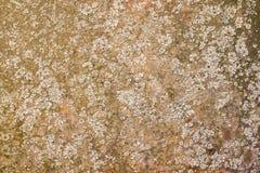 Vieux fond de plaque métallique rouillé de texture, avec le lichen et la mousse Photographie stock libre de droits