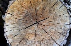 Vieux fond de texture de tronçon d'arbre image libre de droits
