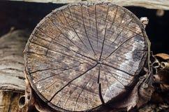 Vieux fond de tronçon d'arbre, texture en bois superficielle par les agents avec la section transversale d'un rondin de coupe Photographie stock libre de droits