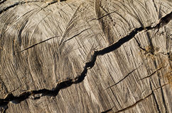 Vieux fond de tronçon d'arbre, texture en bois superficielle par les agents avec la section transversale d'un rondin de coupe Images libres de droits