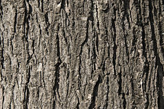Vieux fond en bois Images stock