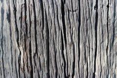 Vieux fond en bois brun abstrait de texture dans le graden Photographie stock libre de droits