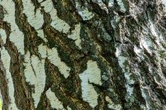 Vieux fond en bois de texture d'arbre images libres de droits