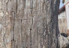 Vieux fond en bois Texture Conseil en bois photos libres de droits