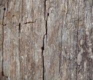 Vieux fond en bois Texture Conseil en bois photographie stock libre de droits