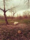 Vieux forgoten la boule du football dans les bois photo libre de droits