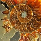 Vieux fossiles Photo libre de droits