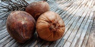 Vieux fruit de noix de coco de Brown photographie stock libre de droits