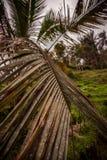 Vieux gisements de riz dans Bali photos libres de droits