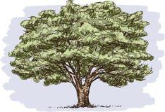 Vieux grand arbre illustration libre de droits