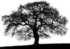 Vieux grand arbre noir de vecteur illustration de vecteur