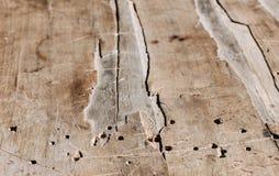 Vieux grand conseil ébréché en bois Images libres de droits
