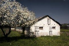 Vieux grange et arbre pierreux photographie stock libre de droits