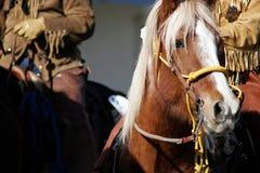 Vieux hommes et cheval de montagne occidentaux Images stock