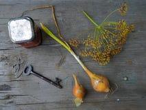 Vieux jardin photographie stock libre de droits