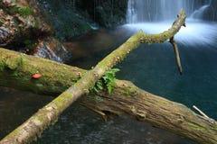 Vieux joncteurs réseau d'arbre et cascade à écriture ligne par ligne Photos stock
