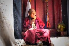 Vieux lama Image stock