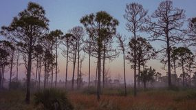Vieux lever de soleil de la Floride photo libre de droits